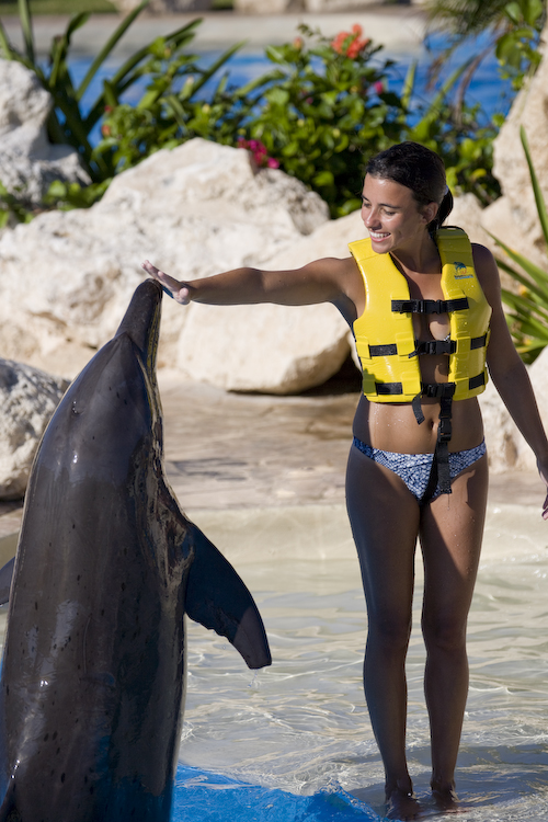 Activities in Cancun - Swimming with Dolphins